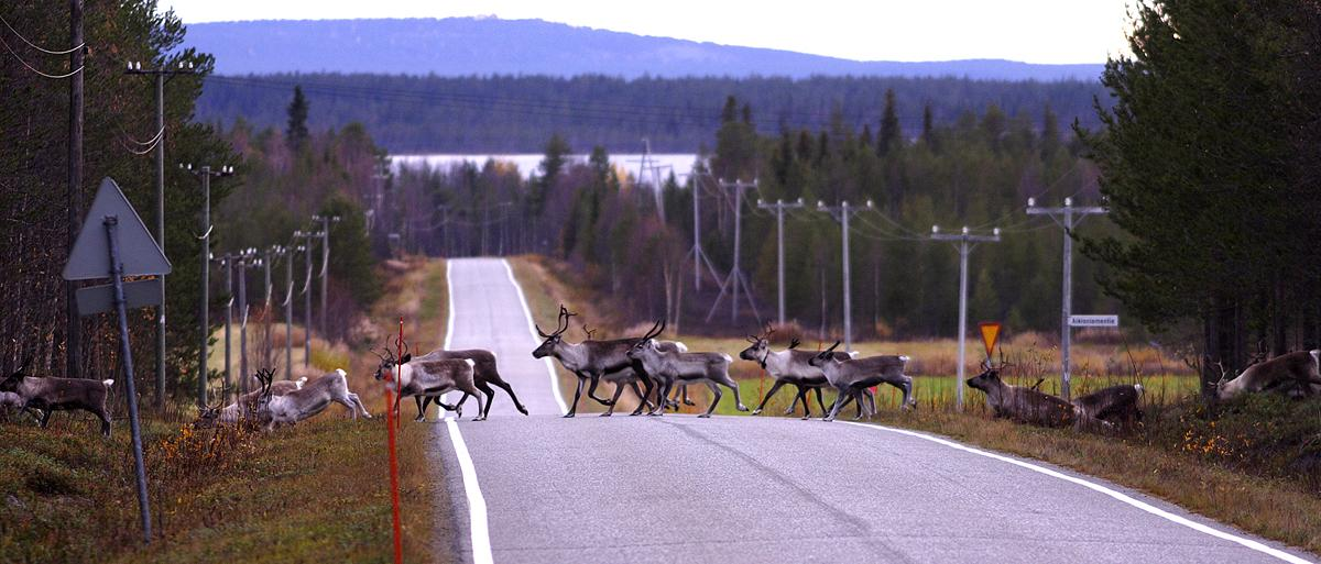Valokuvaaja Timo Ahola - Luonto - 0056 (c) Valokuvaaja Timo Ahola