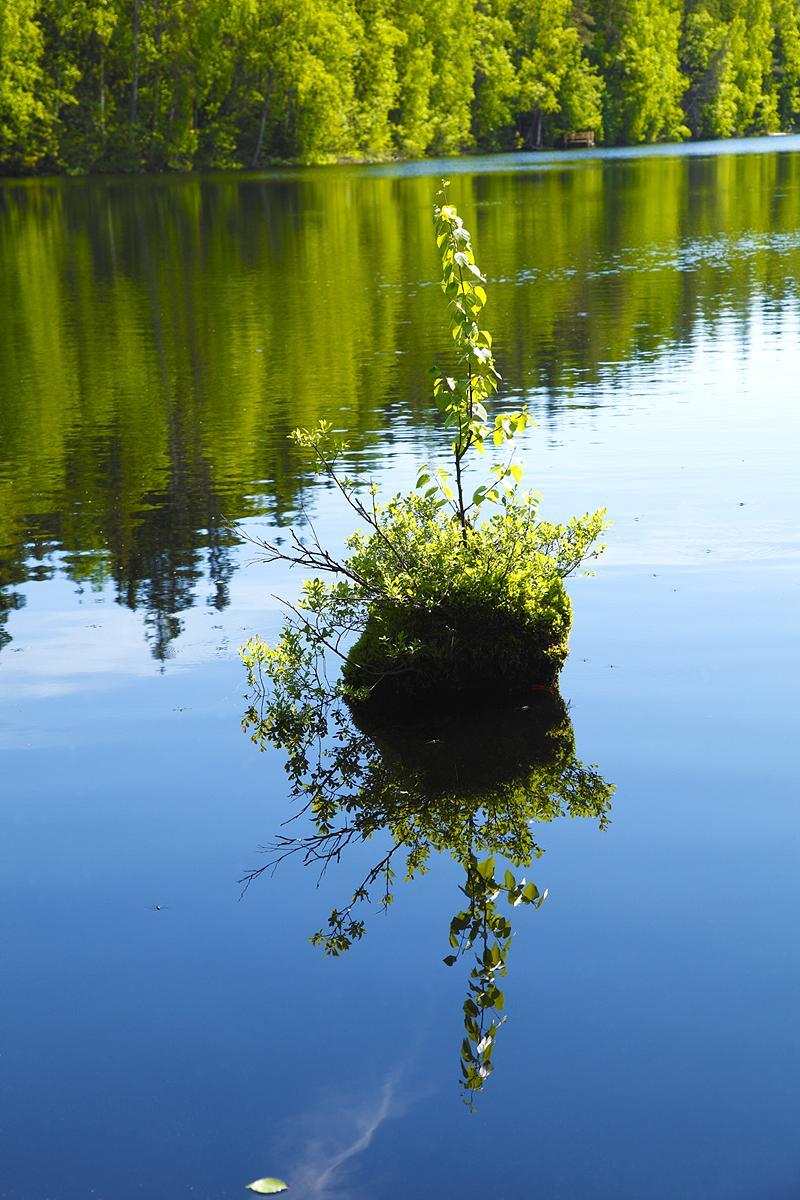 Valokuvaaja Timo Ahola - Luonto - 0020 (c) Valokuvaaja Timo Ahola