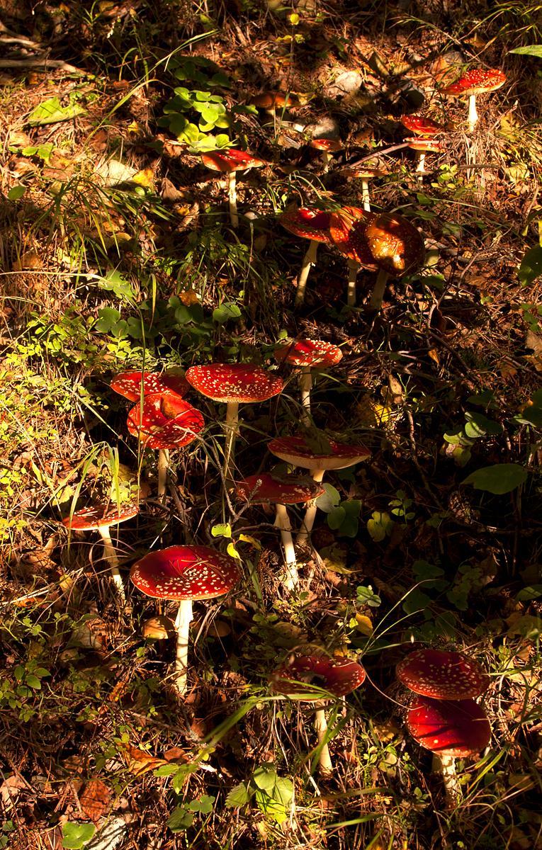 Valokuvaaja Timo Ahola - Luonto - 0041 (c) Valokuvaaja Timo Ahola