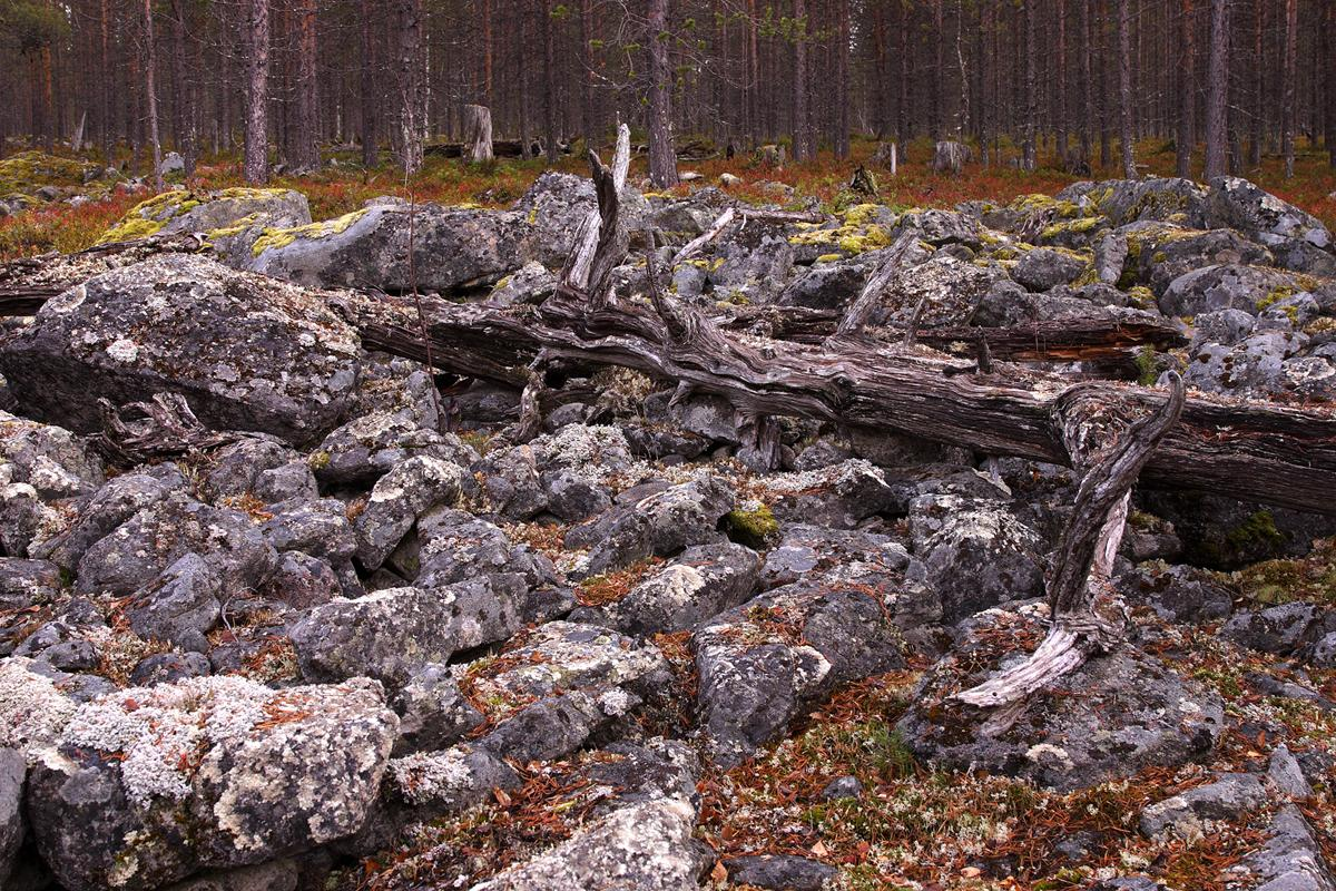 Valokuvaaja Timo Ahola - Luonto - 0034 (c) Valokuvaaja Timo Ahola