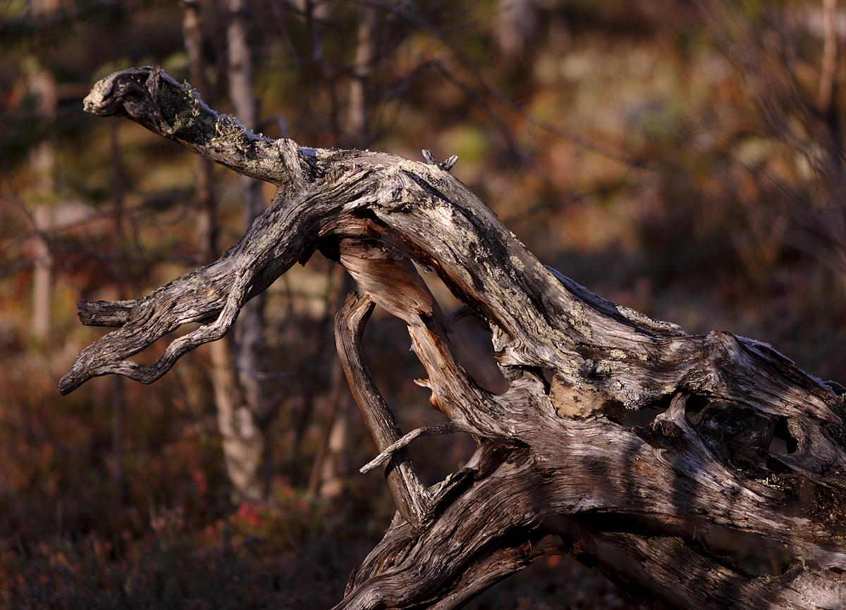 Valokuvaaja Timo Ahola - Luonto - 0033 (c) Valokuvaaja Timo Ahola