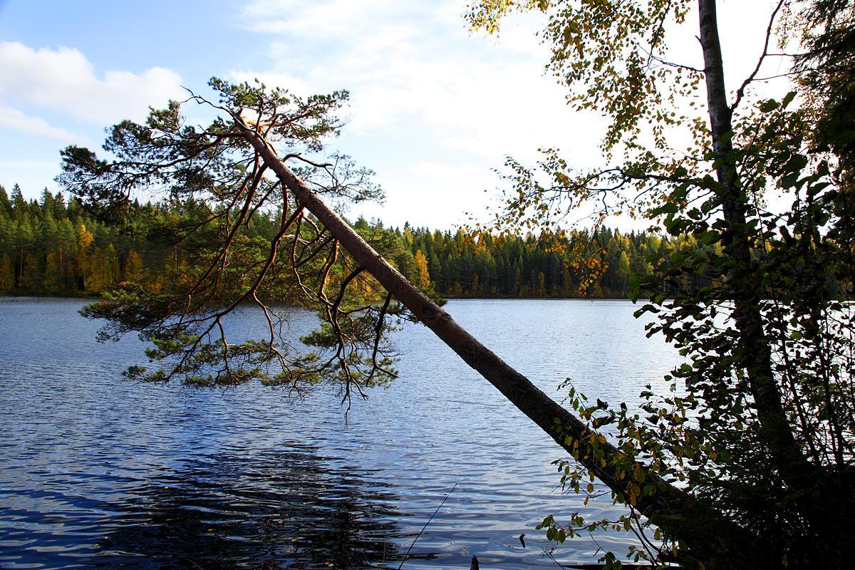 Valokuvaaja Timo Ahola - Luonto - 0025 (c) Valokuvaaja Timo Ahola